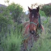 Namaqua Horse Trails