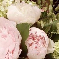 Fleurs de coccinelle