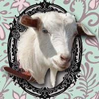 Gaby's Goats Miniature Goat Stud