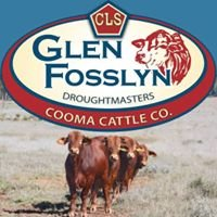 Glen Fosslyn Droughtmasters