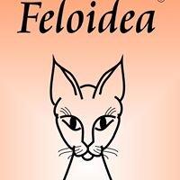 Feloidea, Fernstudium in Klassischer Homöopathie