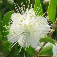 Histria Botanica