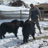 Rocky Mountain Yak and Pack