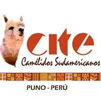 CITE Camelidos  PUNO