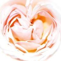 forum rosal
