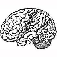 BrainStore Lleida