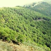 Bentael Nature Reserve