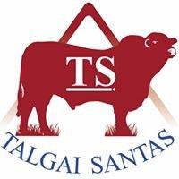 Talgai Santa Gertrudis and Prime Hay Suppliers