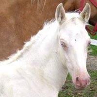 Cream Ridge Equestrian Center