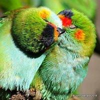 Rainbow Jungle, Kalbarri