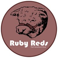 Ruby Reds Poll Hereford Stud