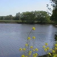 Roding Valley Angling Club