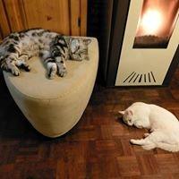 Kattenmand Asiel/Dierenlotdierenambulance - Amivedi Alblasserwaard meldpunt