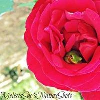 Melissa Sue's Nature Shots