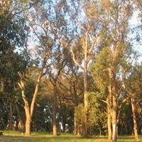 "Nunawading '""Valley Heathy Forest""  Bushland"