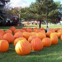 Knights Giant Pumpkins