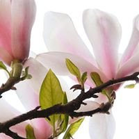 Forever Botanicals