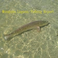 Mosquito Lagoon - Fishing Report