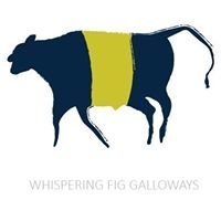Whispering Fig Galloways