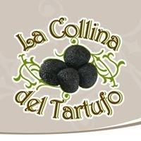 La Collina del Tartufo -  Agriturismo Roccafluvione