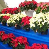 Westwind Florist & Greenhouse