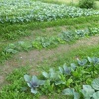 Hillsleigh Harvest