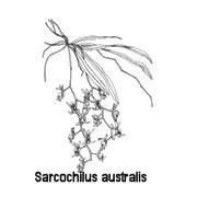 Maribyrnong Orchid Society