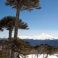 Chile Wild - Las Vertientes de Malalcahuello