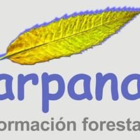 Arpana Formacion Forestal