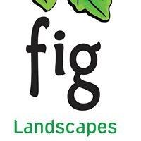 Fig Landscapes