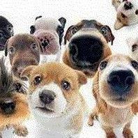 Čtyři Tlapky - nejen salon pro psy