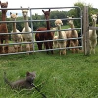 Double D Alpaca Ranch