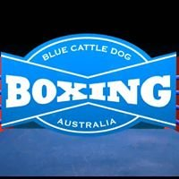 Blue Cattle Dog Boxing Gym