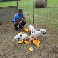 Monte Farms