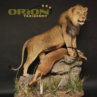 Orion Taxidermy Ltd