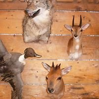 Dick's Taxidermy
