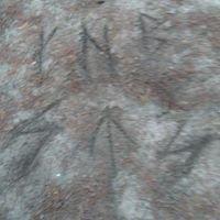 Kamienne Kręgi - Węsiory