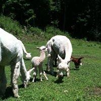 Alpaca Hill Farm