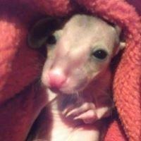 Possum Paws Wildlife Shelter