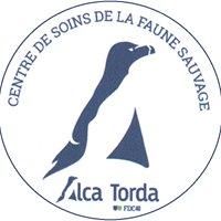 ALCA TORDA