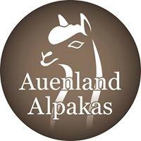 Auenland Alpakas