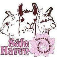 Safe Haven Llama and Alpaca Sanctuary