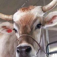 Barex Dairy Family Farm