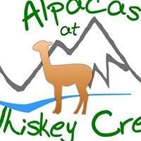 Alpacas at Whiskey Creek
