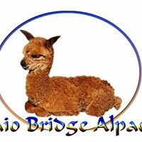 Otaio Bridge Alpacas