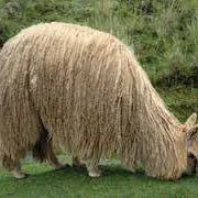 Textil Alpaca