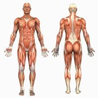 Integrated Bodywork, LLC