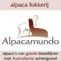 Alpaca fokkerij Alpacamundo