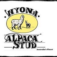 Wyona Alpaca Stud