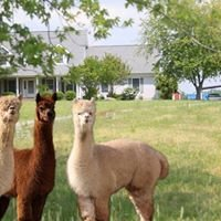 Tuckahoe Treasures Alpaca Farm